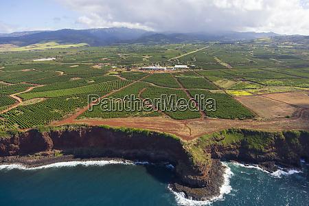 farma kawy kauai hawaje