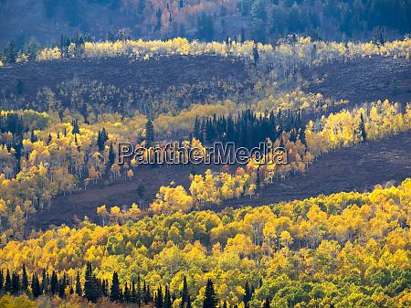 usa utah logan canyon colorful aspens