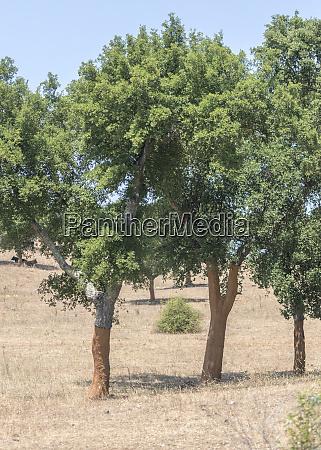 portugalia drzewa korkowe