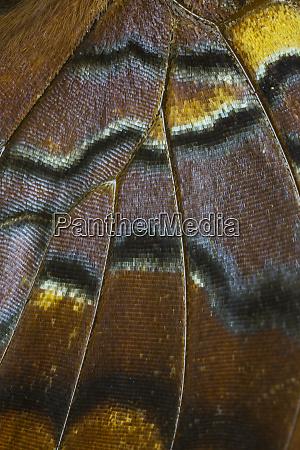 szczegół, szczegółowy, wzór, skrzydła, tropikalnego, motyla - 27877950