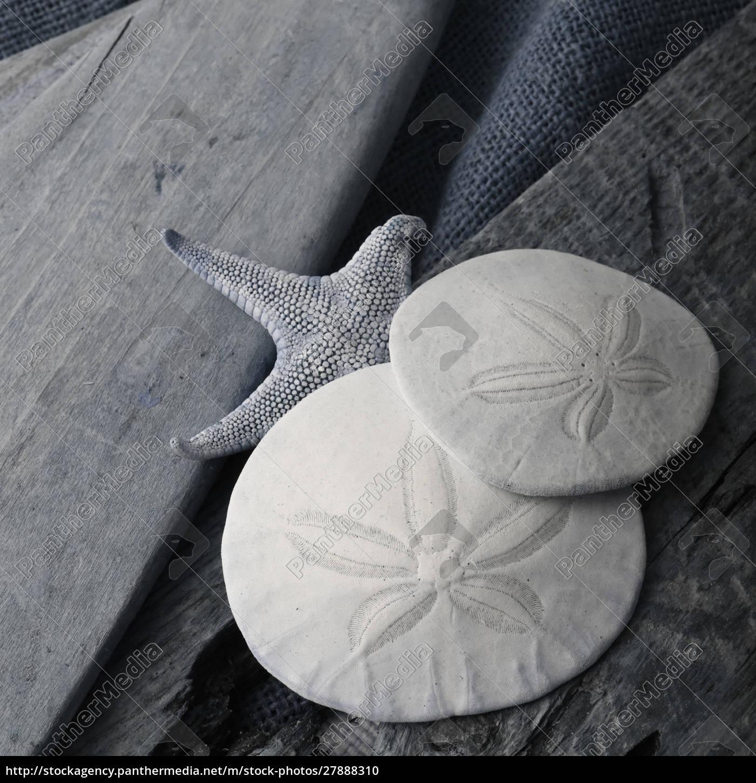natutical, shell, martwa, natura. - 27888310