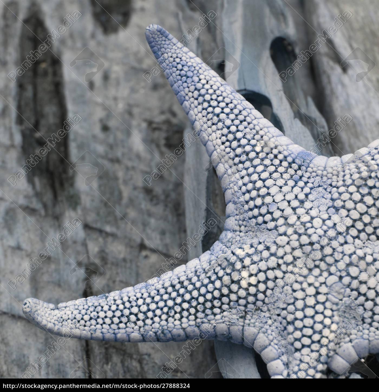 natutical, shell, martwa, natura. - 27888324