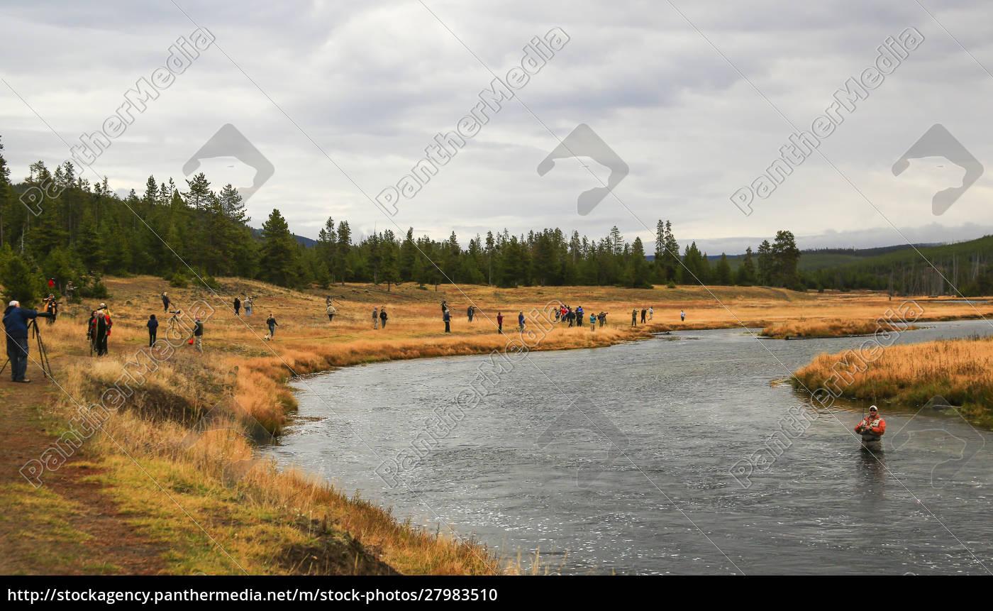 usa, wyoming, yellowstone, national, park, wędkarz, i, widzów - 27983510