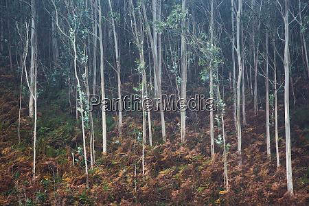 liscie rosnace na drzewie drzew w