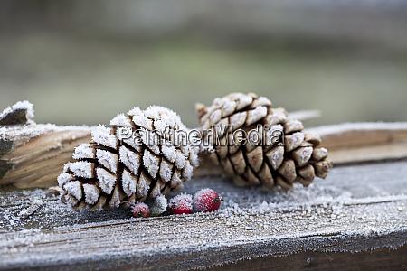hygge, boże, narodzenie, zimowe, martwa, natura - 28796726
