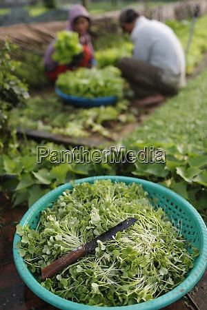 ekologiczne ogrody warzywne w tra que