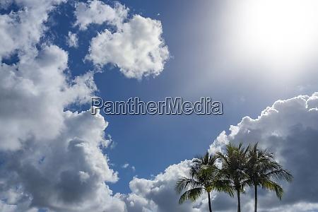 palmy przed pochmurnym niebem