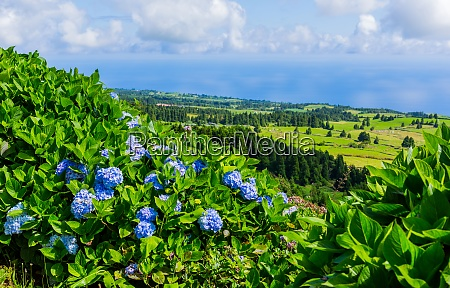 beautiful, landscape, in, azores - 28947903