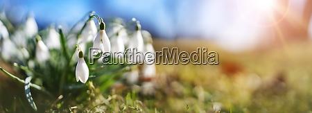 panoramiczny widok na wiosenne kwiaty w