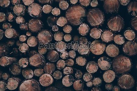 drewno pochloniete
