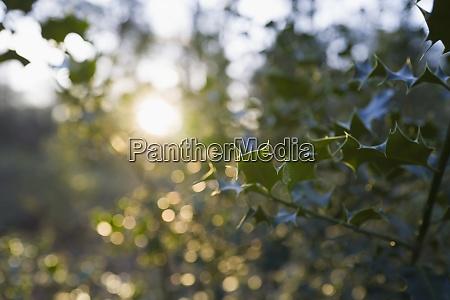 Nr. zdjęcia 29106792