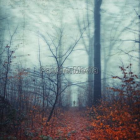 czlowiek chodzacy po lesnej sciezce