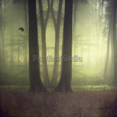 las lisciasty w lecie manipulowany cyfrowo