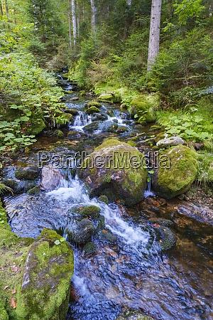 rzeka sollerbach przeplywajaca przez las bawarska