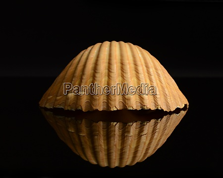 seashell, still, life - 29214554