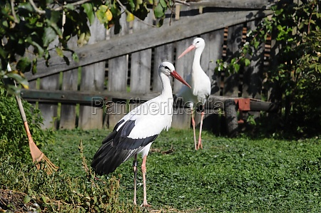 stork, station, for, injured, animals - 29576648