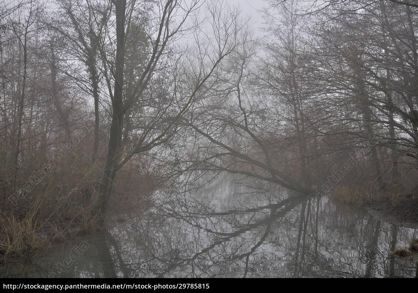 odbicie, gołych, gałęzi, rzeka, adda - 29785815