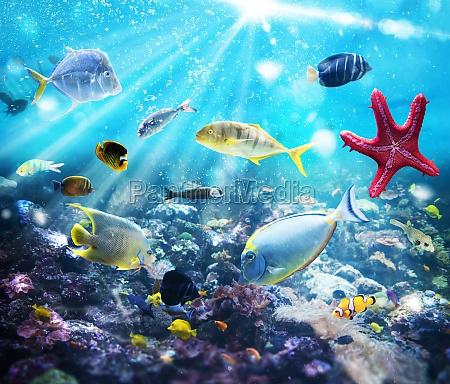 Życie, morskie - 29839187