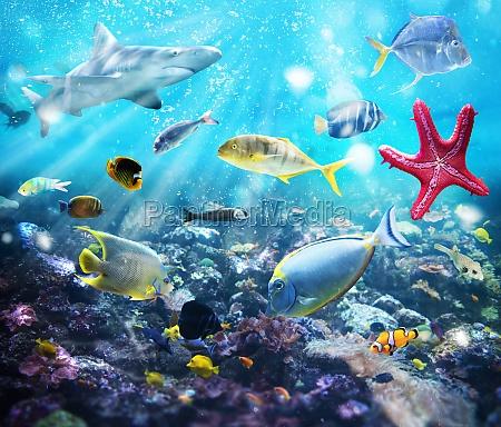 Życie, morskie - 29839195