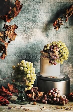 winogrona nadal zyje