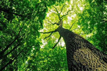 zielony, Kolor, tło, tła, dzień, jasne - B9844164