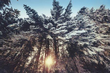 kolor bialy niebieski tlo niebo piekna