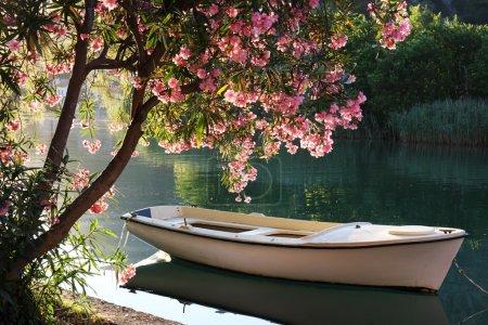 Włączone, Widok, Piękna., dzień, Sezon, Lato - B6181791